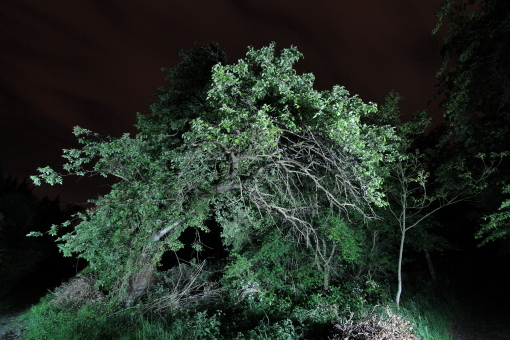 "untitled, series ""night tree"""