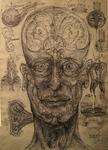 Human head vortex