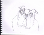 Bulldog cartoon WTF