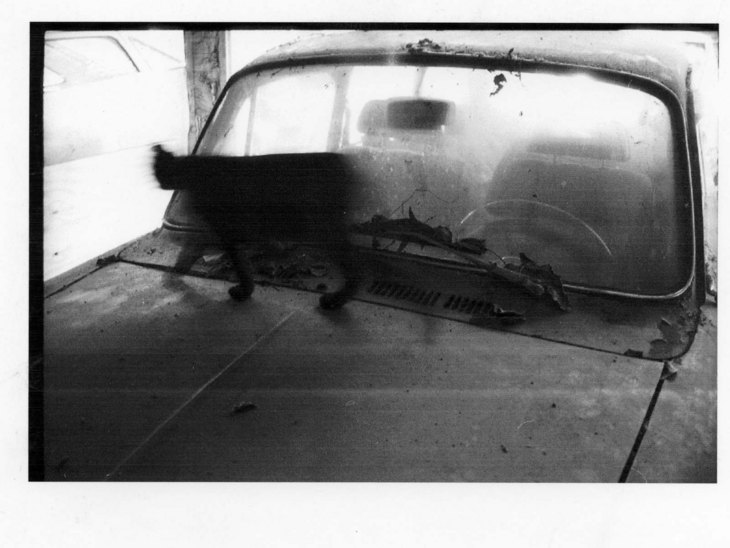 black cat through car
