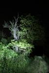 Nachtlandschaft_Rhens_05