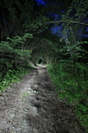 Nachtlandschaft_Rhens_01