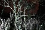 Nachtlandschaft_Graswerth_31