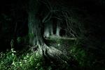 Nachtlandschaft_Graswerth_15