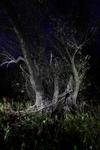 Nachtlandschaft_Graswerth_11
