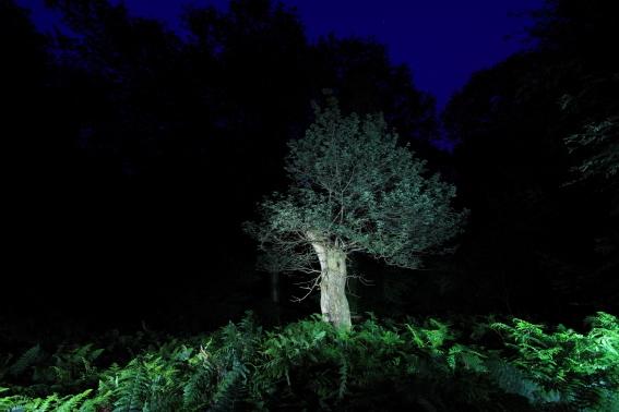 Nachtbaum_Urwald_WildhGeest_06
