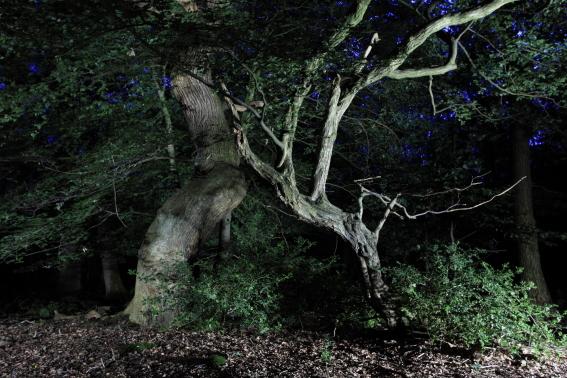 Nachtbaum_Urwald_WildhGeest_02