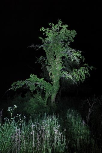 Nachtbaum_Rhens_09
