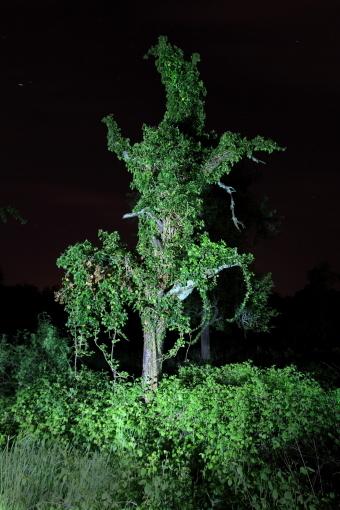 Nachtbaum_Rhens_05