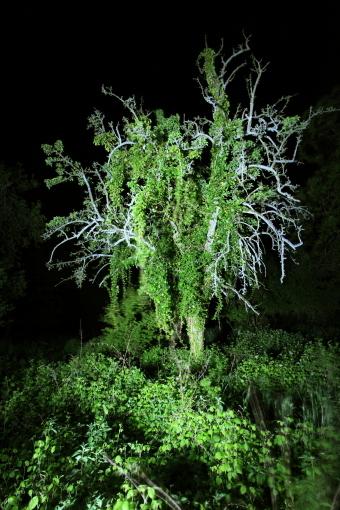 Nachtbaum_Rhens_03