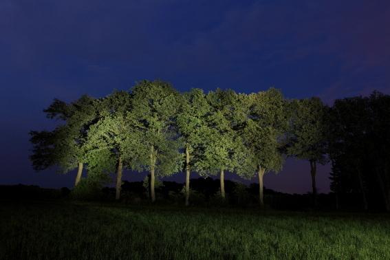 Nachtbaum_NSG_hoheMark