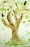 My Beautiful Olive Tree