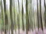wood_I