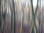 wood_6
