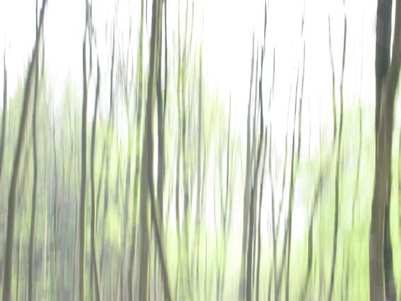wood_9