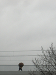 grey days_2