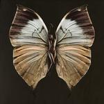 SchmetterlingVeronica
