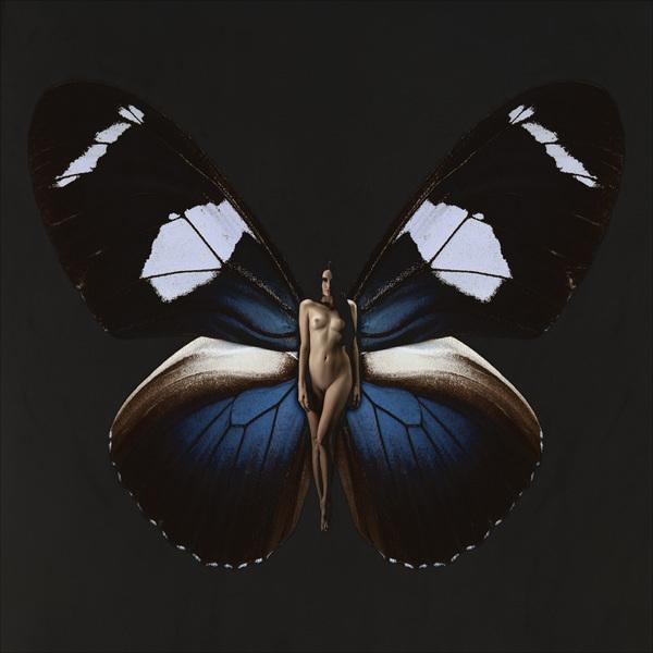 SchmetterlingAmanda