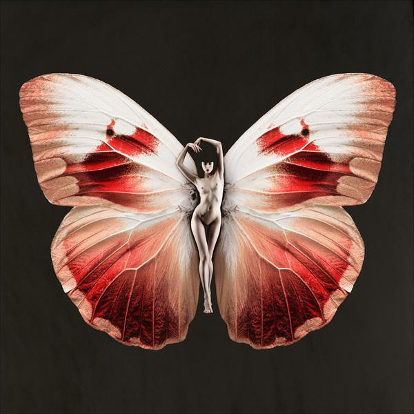 SchmetterlingGamma