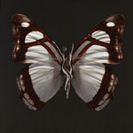 SchmetterlingElena