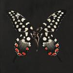 SchmetterlingAna