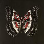 SchmetterlingRejane