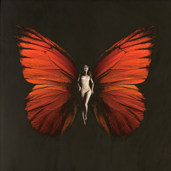 SchmetterlingAnnaMaria#2