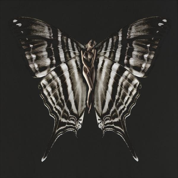 SchmetterlingLea01