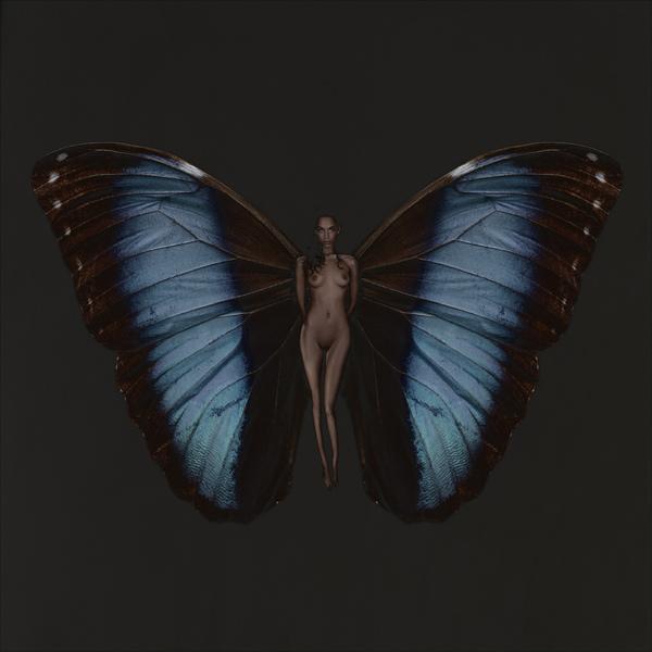 SchmetterlingAnissa01
