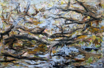 Geert Cox - Fenn marshes