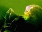 La Fée Verte