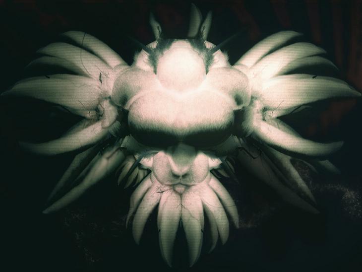orchidee_1024