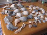 Seashell Things