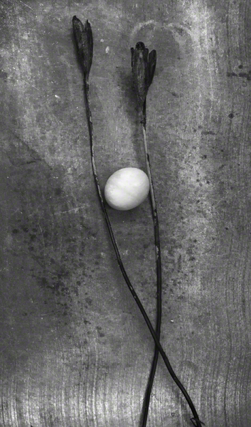 Egg With Stems
