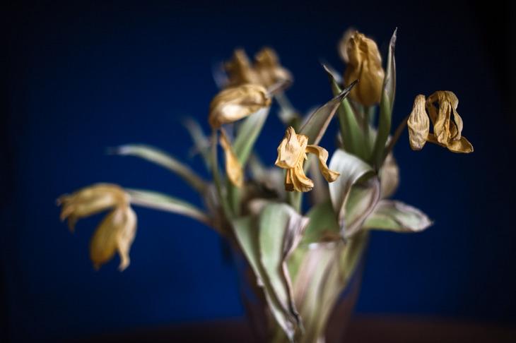 flowerish IV
