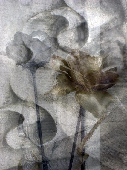 a rose is still a rose _2