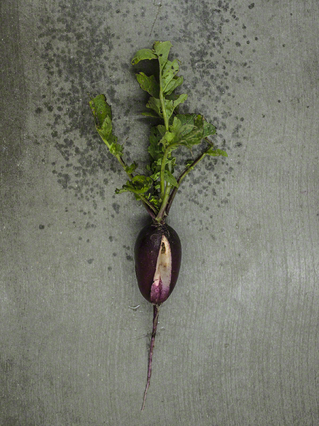 Radish With Indeterminate Saint