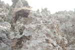 Hairy rocks