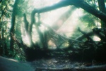 Hocking roots