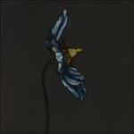 BlauerMohn#1Gold