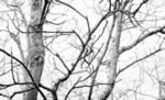 Árvore_RAMOS