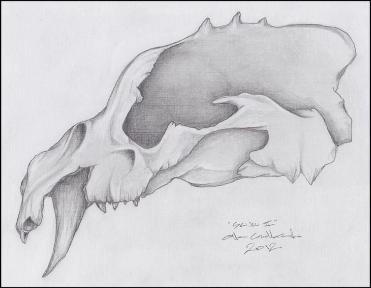Skull - 2012