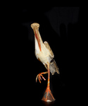 Storch#3