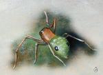 Ant Spider I