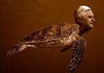 turtle pope 3