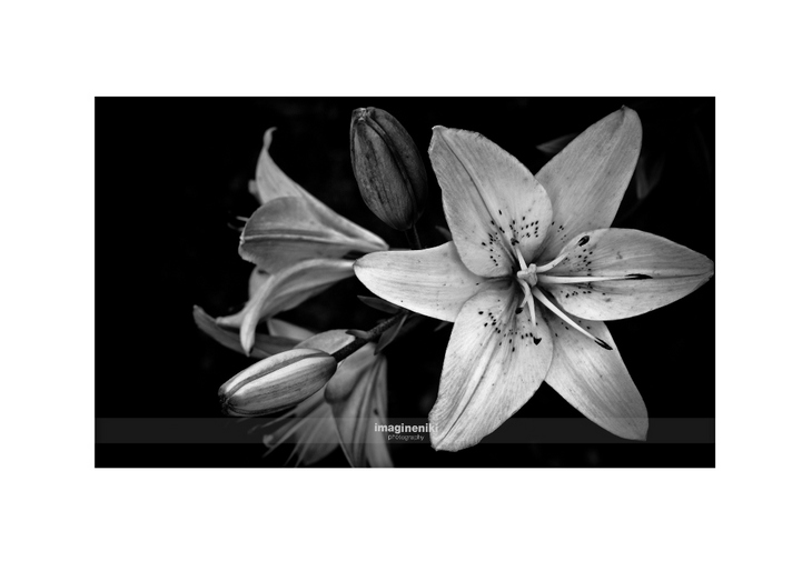 62012_010_(c) imagineniki photography