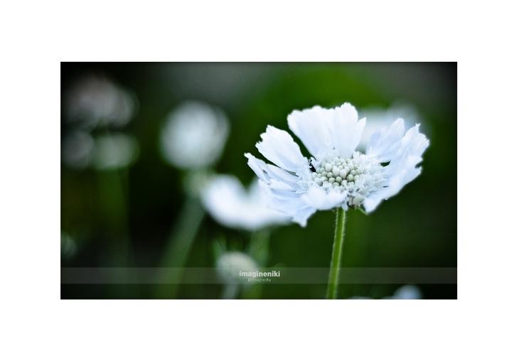 62012_007_(c) imagineniki photography