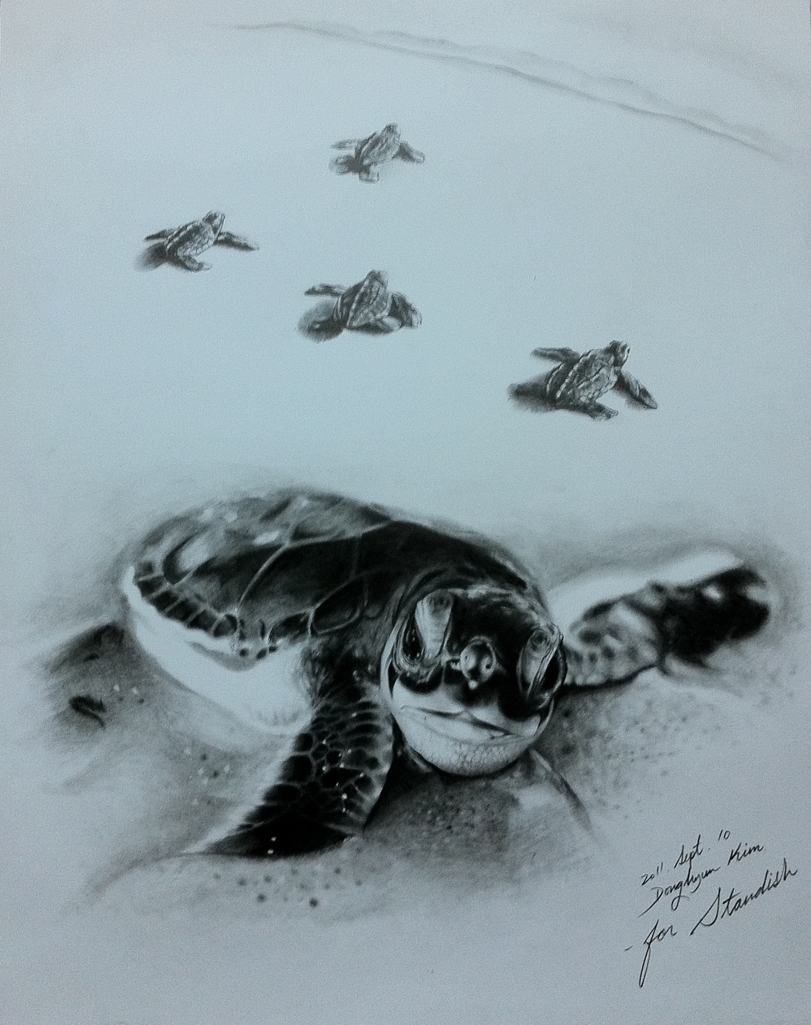 Gallery For gt Baby Sea Turtles Drawings