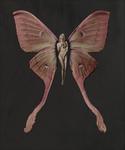 SchmetterlingKat#02