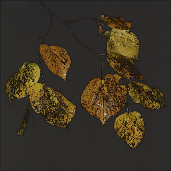 AutumnLeaves#07Gold